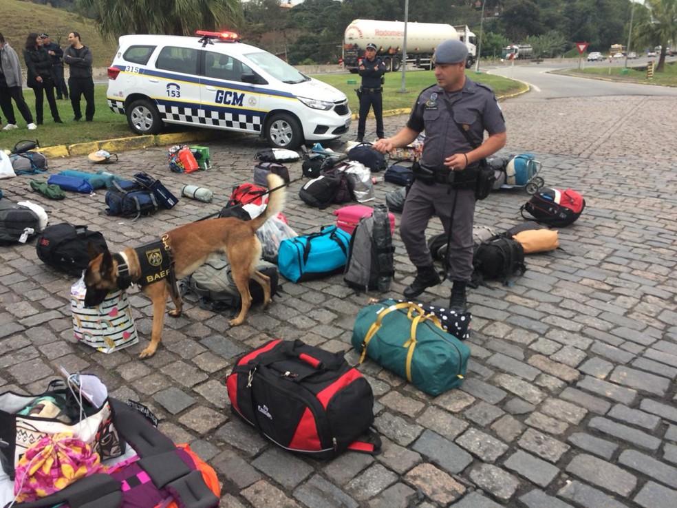 Cão do Baep, da PM, busca drogas em bolsas de jovens que seguiam para festa rave em Lagoinha (SP) — Foto: Peterson Grecco/ TV Vanguarda