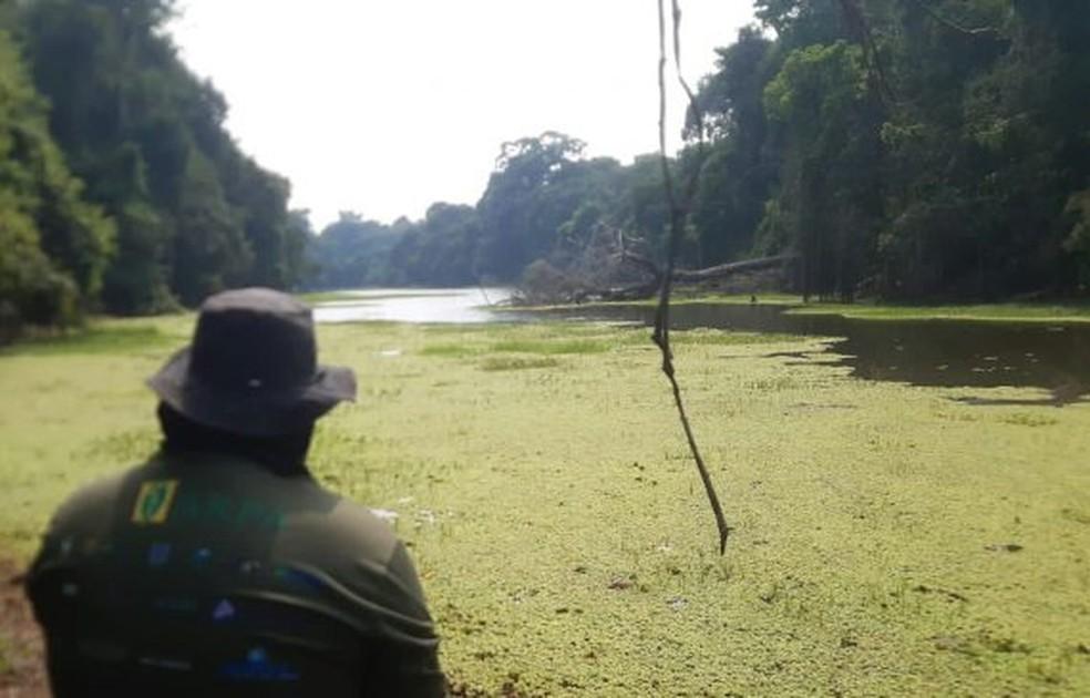 Levantamento analisa a possibilidade da superpopulação de pirarucu na Reserva Extrativista Rio Pacaás Novos. — Foto: Sedam/Divulgação