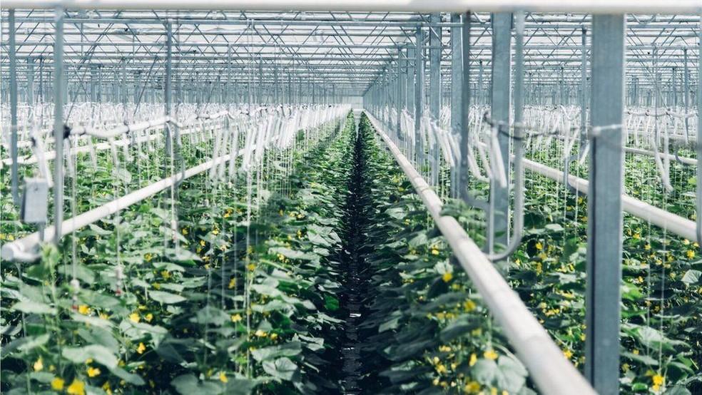 Vendido para uma estufa próxima, gás é usado para cultivar plantas  (Foto: Climeworks)