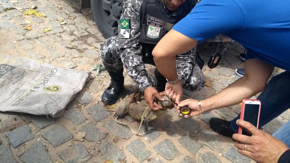 Filhote de jacaré também foi apreendido em Vera Cruz (Foto: Ediana Miralha/Inter TV Cabugi)