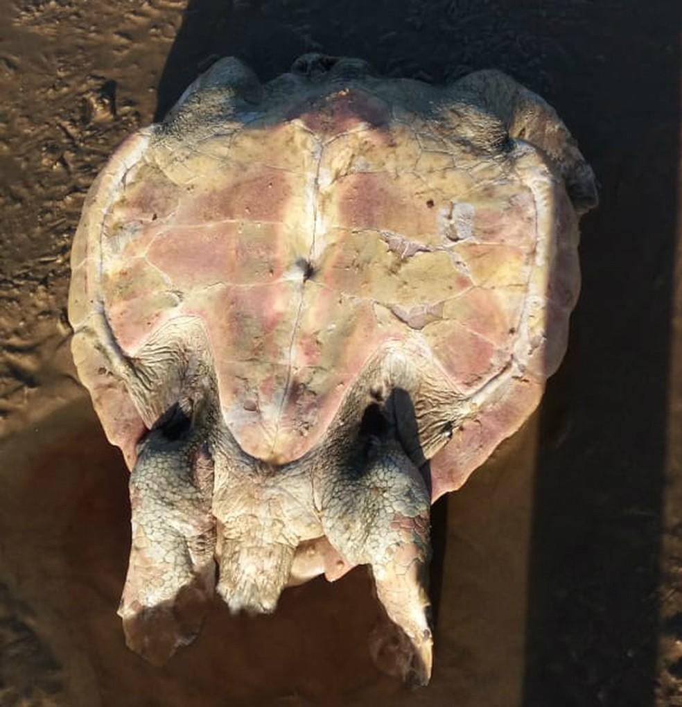 Projeto A-mar registrou 74 mortes de tartarugas no sul da Bahia — Foto: Divulgação/Projeto A-mar