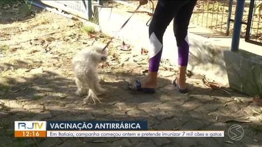 Campanha de vacinação imuniza cães e gatos contra a raiva em Itatiaia