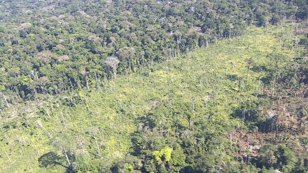 Área desmatada em meio a reserva indígena em RO — Foto: Reprodução/Rede Amazônica