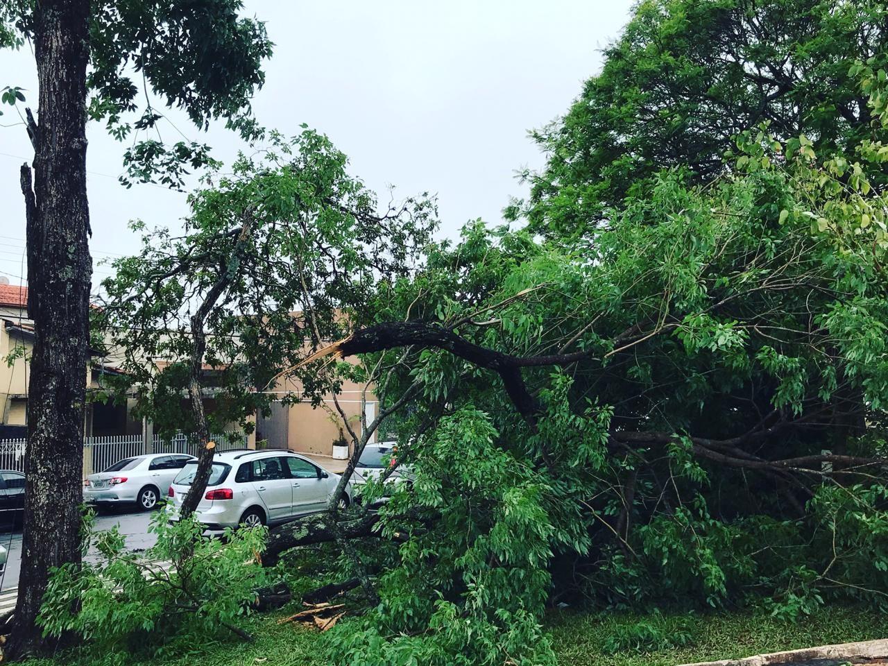 Região de Presidente Prudente é atingida por 13 mil raios durante temporal, aponta concessionária de energia - Notícias - Plantão Diário