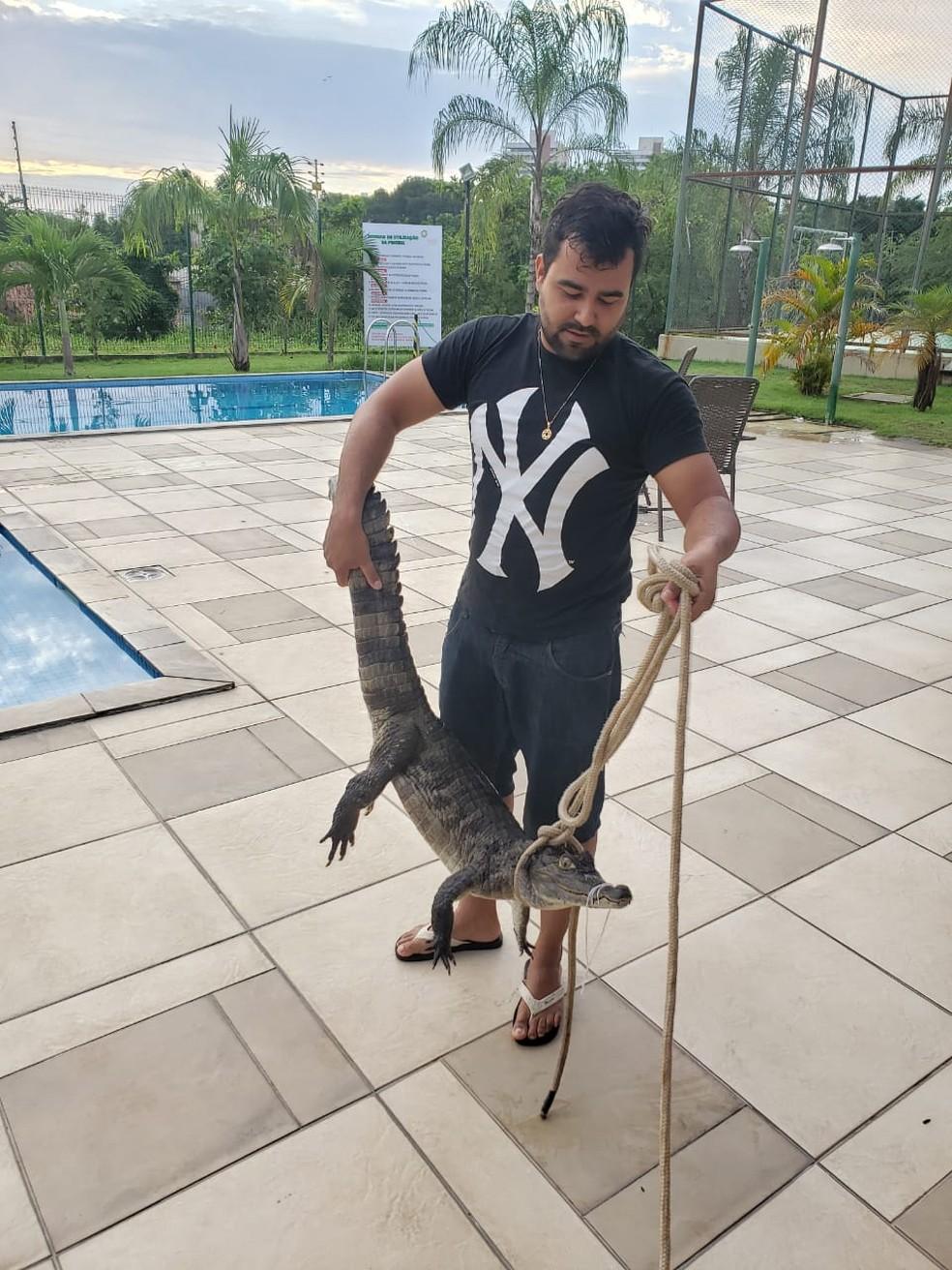Matheus Vilela segura o jacaré que foi encontrado dentro de piscina em condomínio residencial de Manaus — Foto: Arquivo pessoal