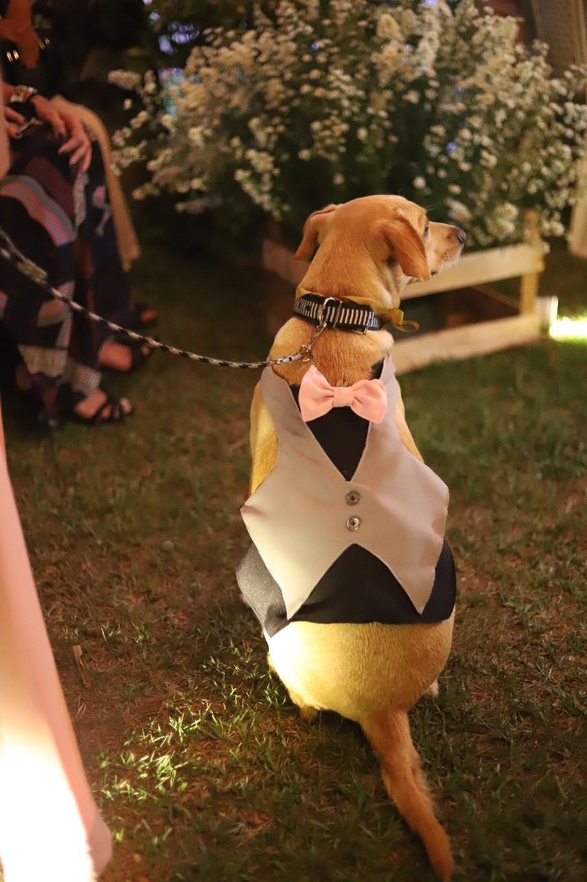 Cão adotado após ser abandonado na rua leva alianças em casamento no RJ