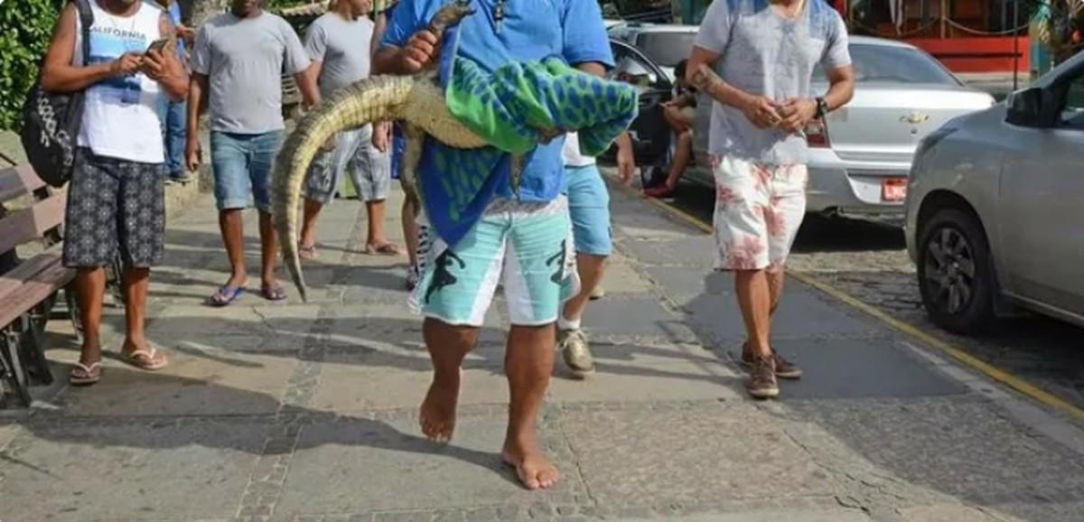 Jacaré aparece ferido em praça de Búzios, RJ, e foto flagra homem levando o animal antes do socorro chegar