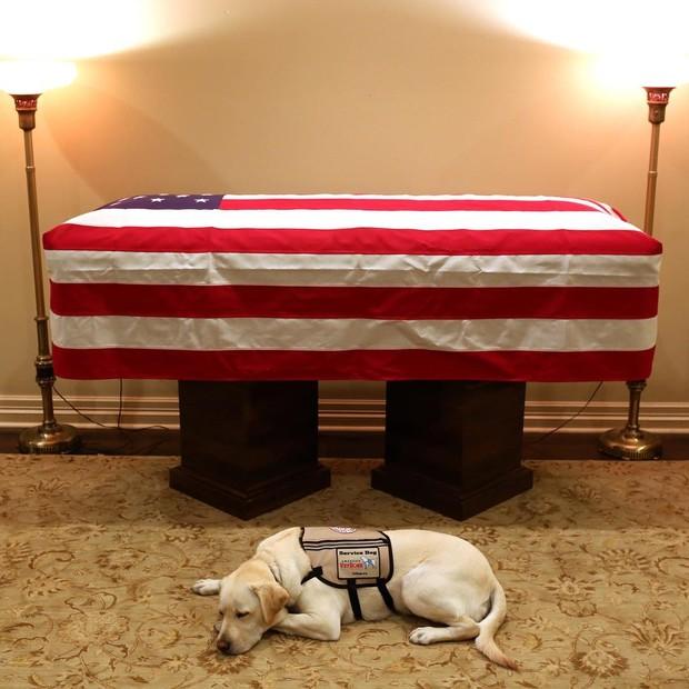 Cão Sully ao lado do caixão de George H.W. Bush (Foto: reprodução/instagram)