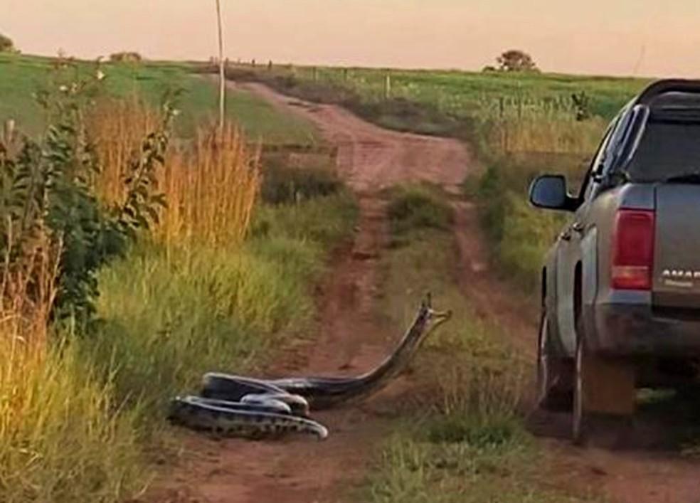 Momento em que caminhonete passa em estrada de MS e animal tenta dar o bote  — Foto: Redes Sociais/Reprodução