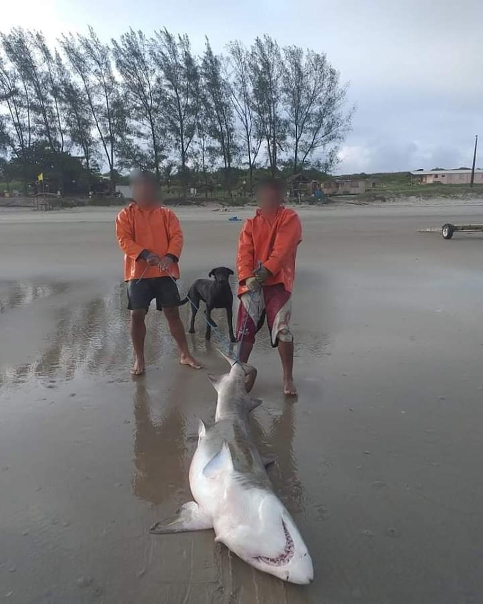 Pescadores exibiram o tubarão morto nas redes sociais ? Foto: Divulgação/Polícia Ambiental