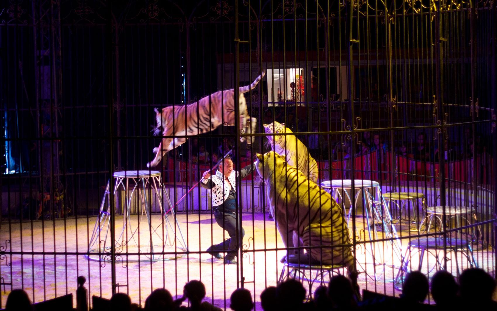 Portugal proíbe a utilização de mais de mil animais selvagens em circos