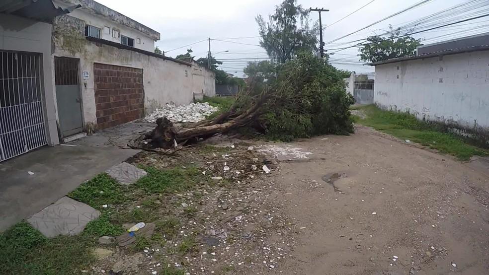 Árvore caiu durante a madrugada no bairro do Ipsep, no Recife, nesta quinta-feira (20) — Foto: Elvys Lopes/TV Globo