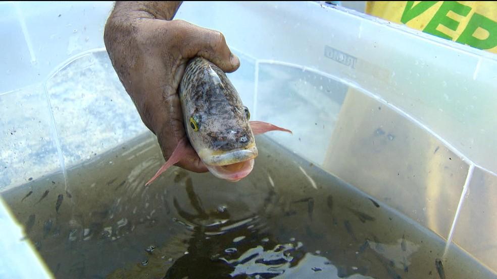 Peixes de chafariz do Museu Nacional sobreviveram ao incêndio (Foto: Reprodução / TV Globo)