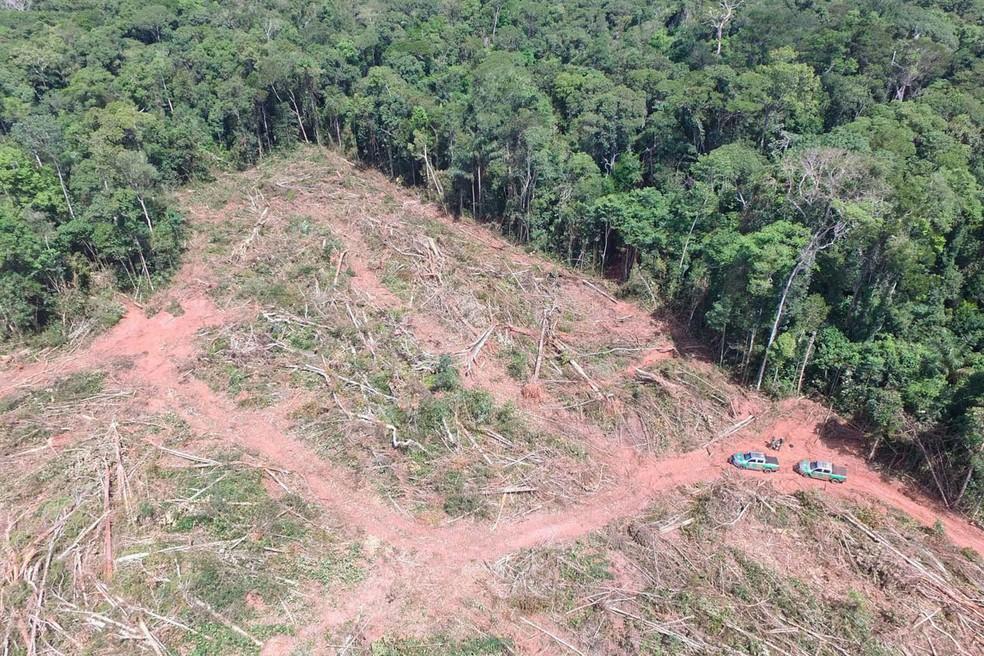 Ibama aplica multa de R$ 24 milhões por desmate ilegal de árvores ameaçadas de extinção em Mato Grosso (Foto: Ibama)