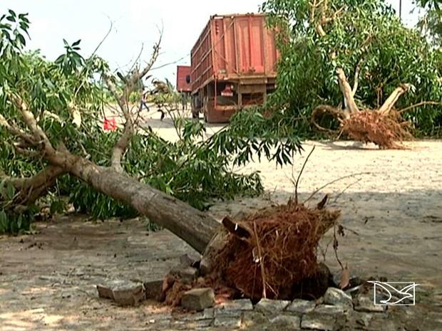 Ventos fortes arrancaram árvores em uma fazenda (Foto: Reprodução / TV Mirante)