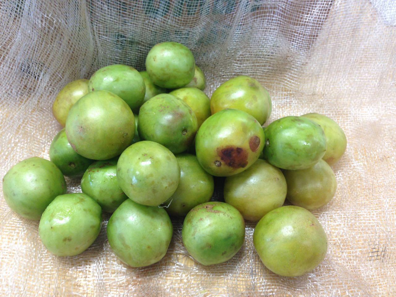 umbu-imbu-fruta-fruto-receita (Foto: Nathalia Fabro/ Editora Globo)