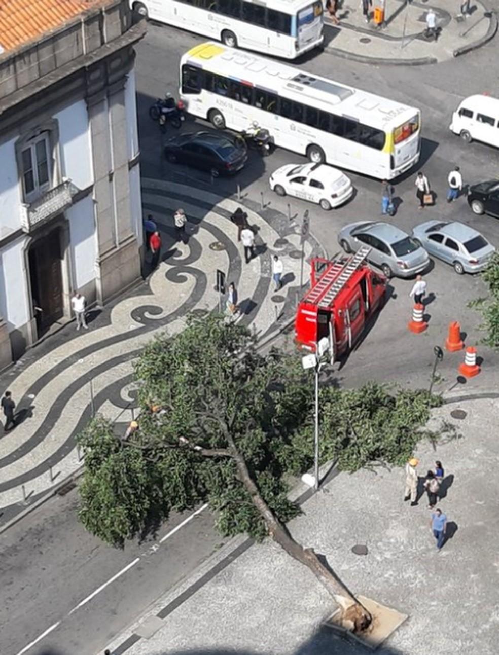 Árvore caiu na Candelária, no Centro do Rio. — Foto: Reprodução/Internet