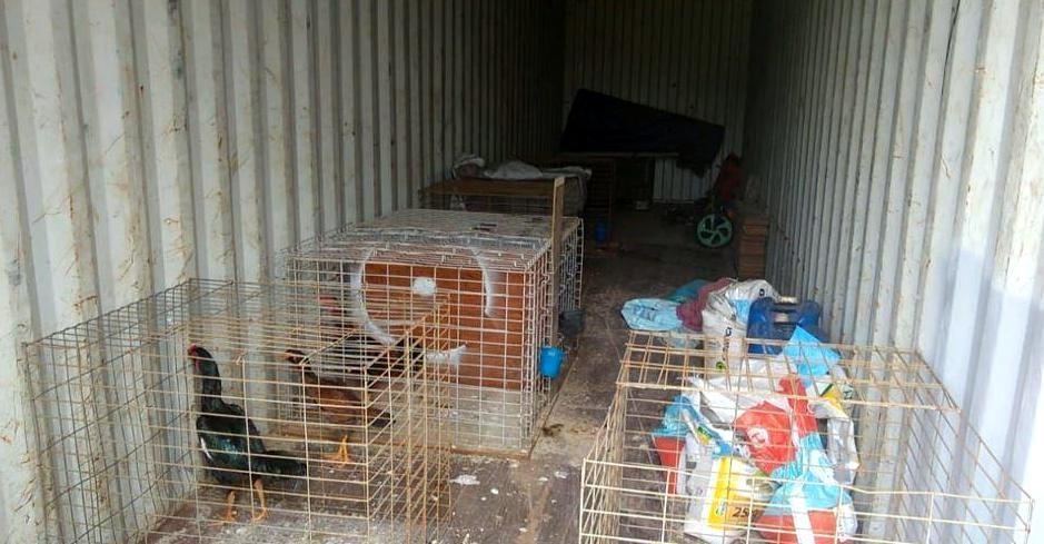 Polícia Ambiental de Araraquara apreende galos de rinha e cães e multa dono em R$ 240 mil