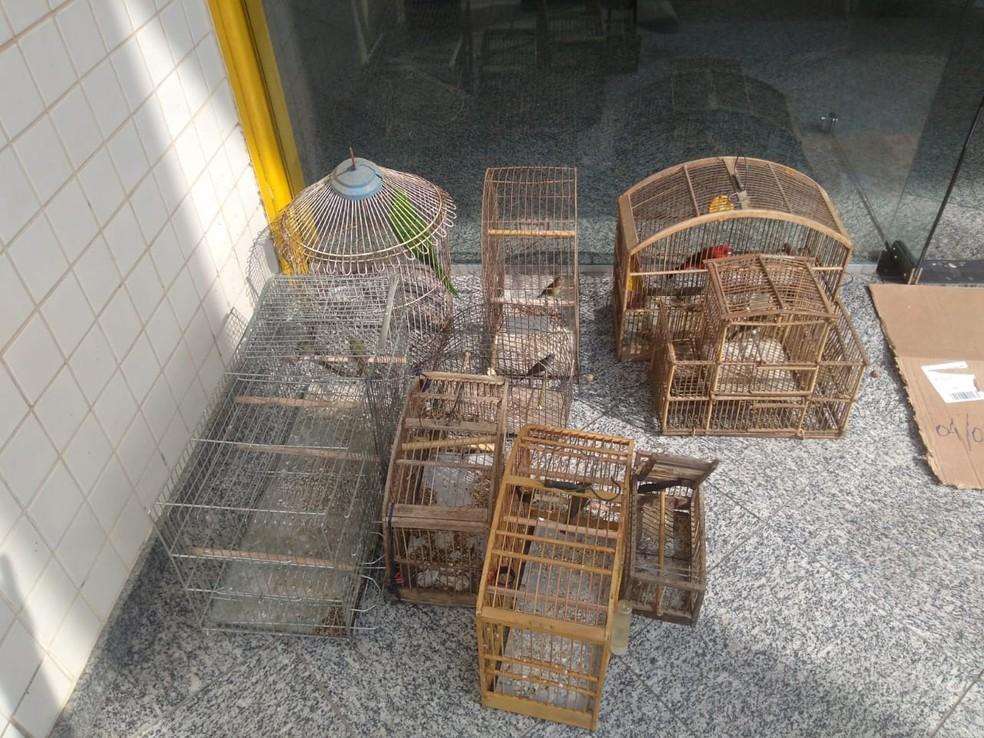 Pássaros apreendidos pela PM em Piraí. — Foto: Divulgação/PM