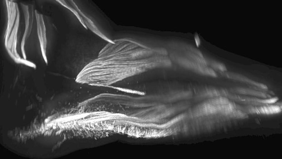Músculos no pé de um bebê — Foto: Rui Diogo, Natalia Siomava e Yorick Gotton