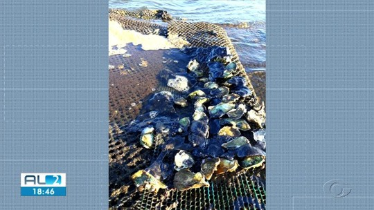 Óleo destrói produção de ostras em Porto de Pedras, AL