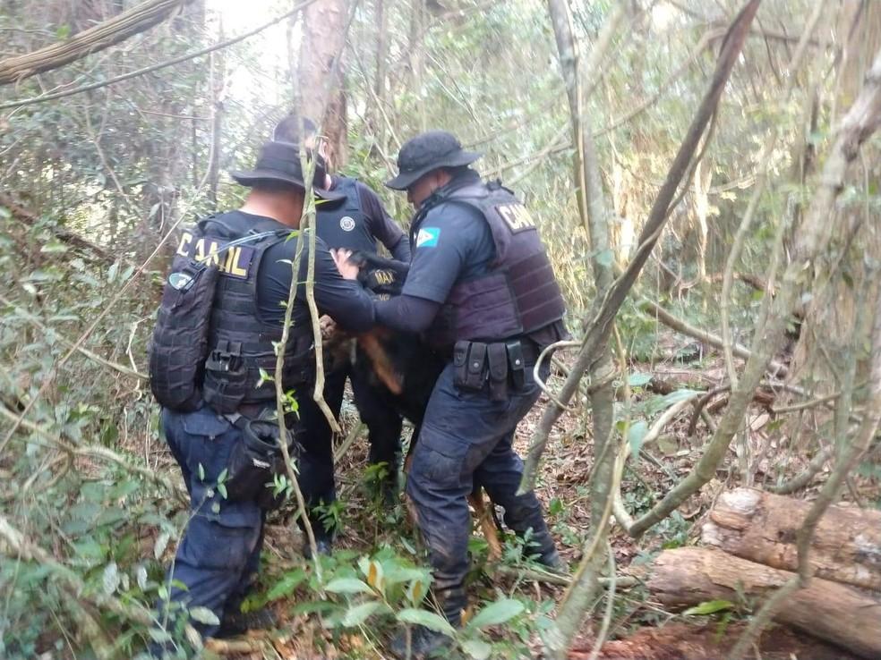Policiais levaram roupas de duas pessoas até a mata em Alumínio onde Aline Dantas foi encontrada, para serem periciadas com ajuda de cães farejadores — Foto: Arquivo Pessoal