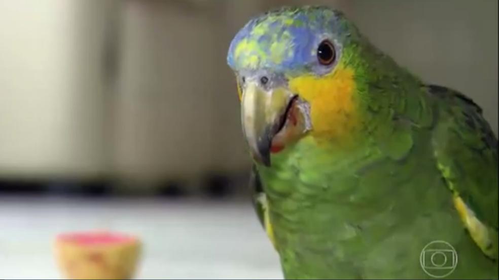 Papagaio Leozinho vive com Izaura Dantas há mais de 20 anos (Foto: Reprodução/Fantástico)
