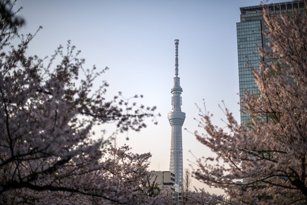 TOKYO, JAPAN - MARCH 29:  Cherry blossom grows near the Tokyo Skytree in the distance, on March 29, 2018 in Tokyo, Japan. The tower was opened to the public in May 2012 and is the tallest tower in the world and the second tallest structure in the world af (Foto: Getty Images)