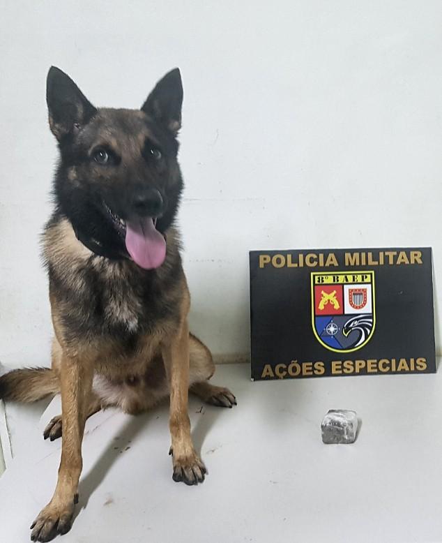 Rapaz acaba preso após cão de faro da PM indicar maconha escondida entre laje e telhado de casa abandonada