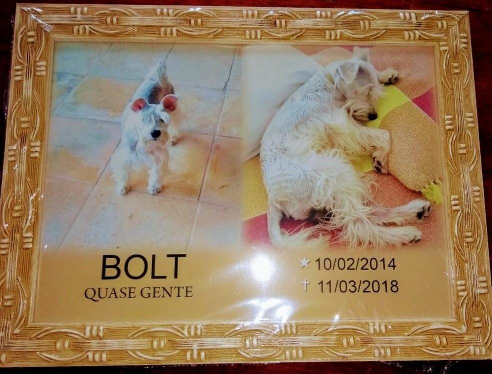 Bolt morreu após ser atacado por cães maiores que passeavam sem a guia, em Fortaleza; dono foi mordido e registrou Boletim de Ocorrência. (Foto: Arquivo Pessoal)