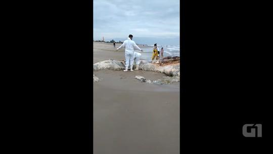 Vídeo mostra baleia jubarte morta em praia de Pontal do Paraná