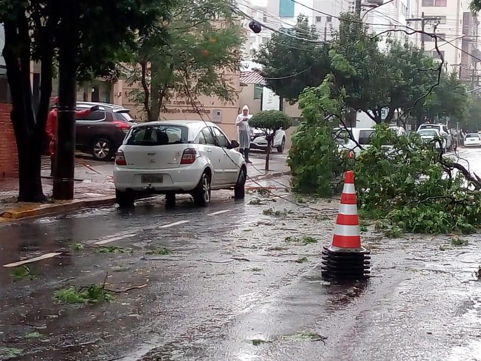 Árvores, galhos e fios caíram em vários pontos da cidade em razão da tempestade — Foto: David Melo/TV Morena