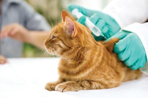Vacinação antirrábica gratuita para cães e gatos é realizada no sábado em Resende