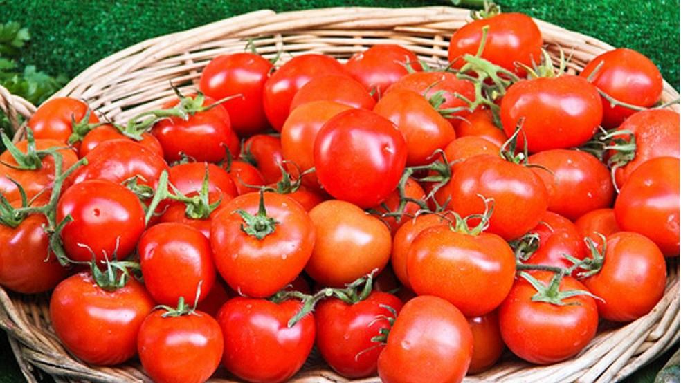 Especialistas recomendam moderação no consumo do tomate — Foto: Divulgação/Prefeitura de Tatuí
