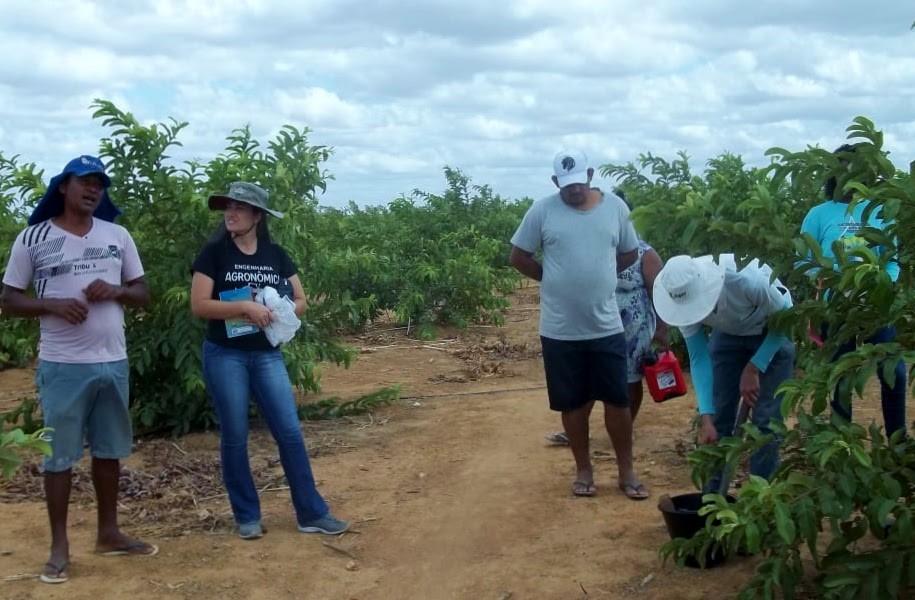 Projeto do IF Sertão-PE oferece análise de solo gratuita para pequenos produtores em Petrolina - Notícias - Plantão Diário