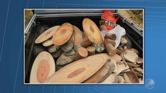 Seis mandados de busca são cumpridos em combate à extração ilegal de madeira na BA