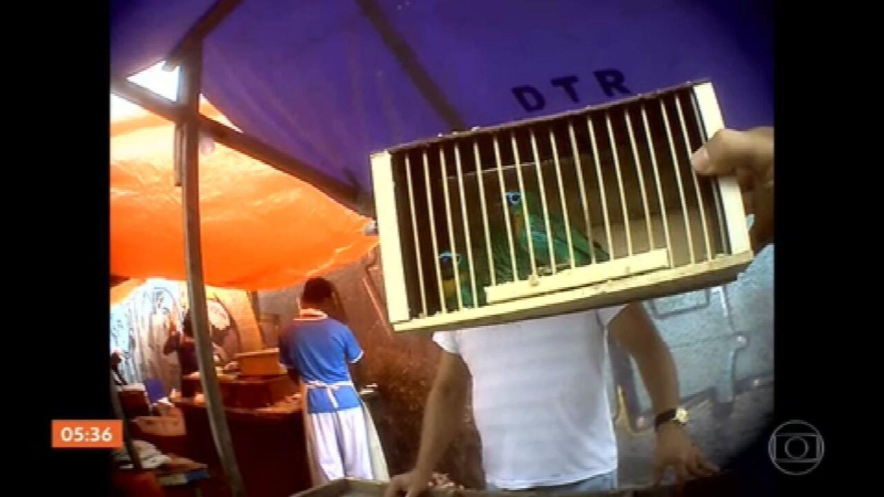 Animais silvestres são vendidos ilegalmente em feira no Rio de Janeiro