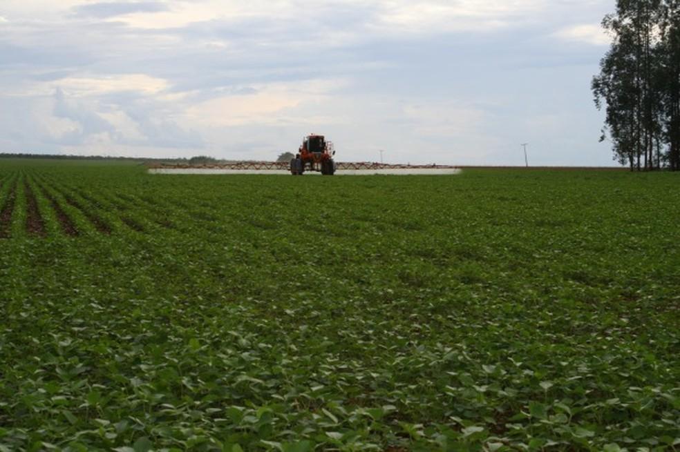 Pulverização de lavoura de soja — Foto: Amanda Sampaio/G1 MT