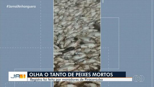 Comunidade ribeirinha se assusta com morte de centenas de peixes no Rio Meia Ponte, em Piracanjuba; vídeo