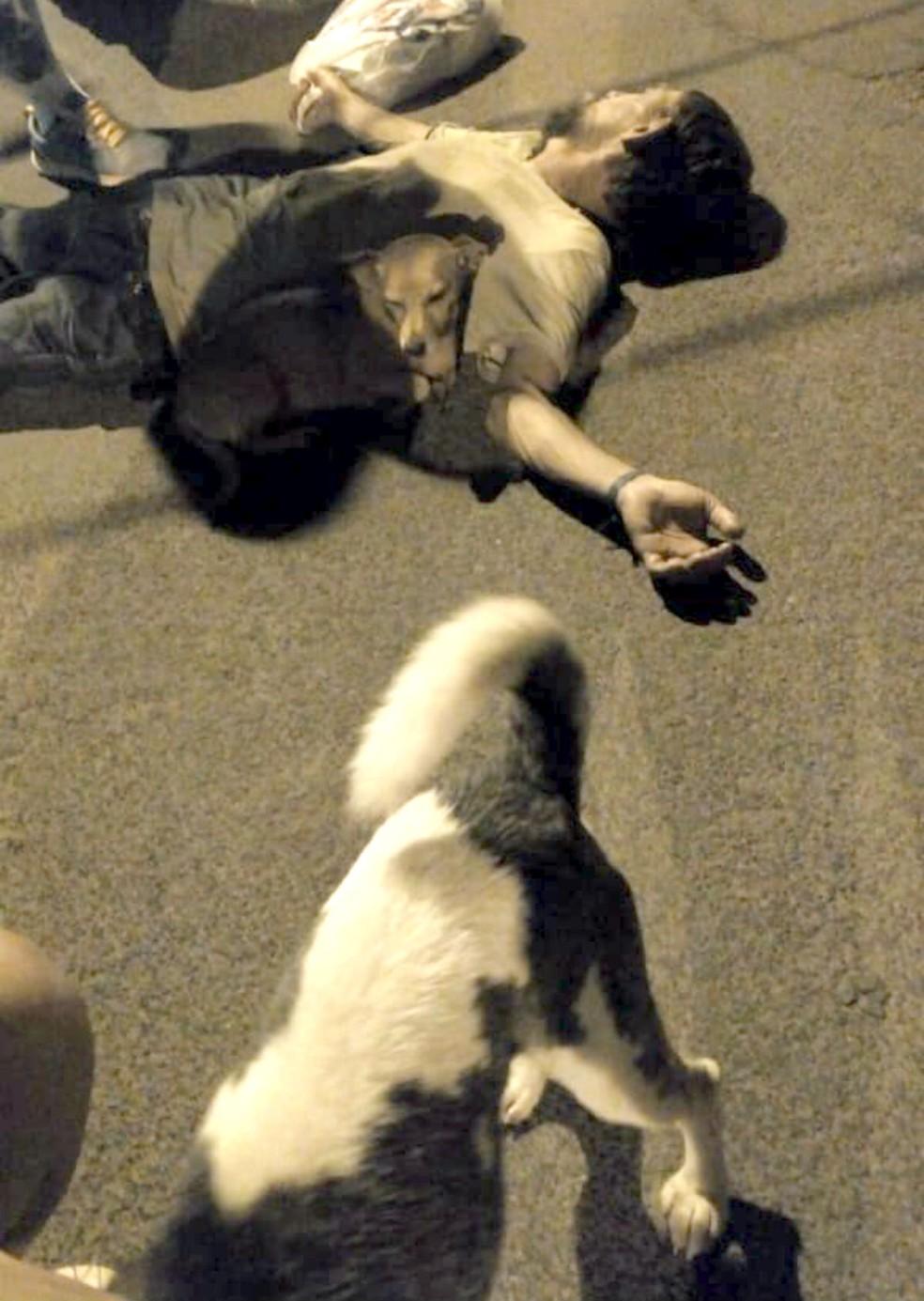 """Os dois cães permaneceram o tempo todo ao redor do home caído: """"São como se fossem meus filhos"""" — Foto: Thaís Brandão/Arquivo pessoal"""