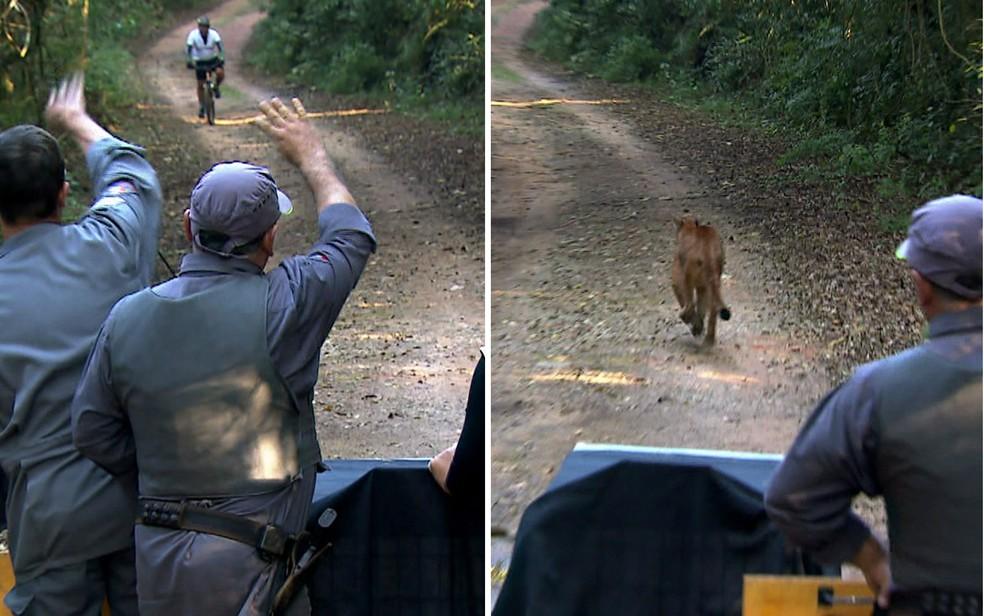 Ciclista foi avisado que onça seria libertada na trilha (Foto: TV Globo/Reprodução)