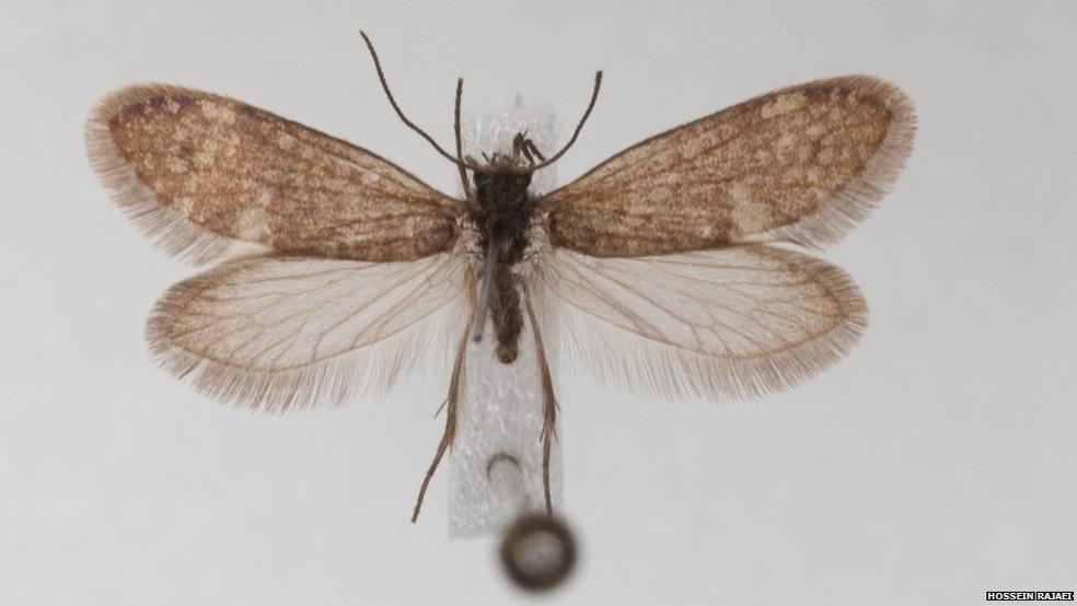 Mariposa viva: DNA delas e das borboletas são as principais bases para pesquisas, uma vez que evidências fósseis são raras (Foto: Hossein Rajaei)