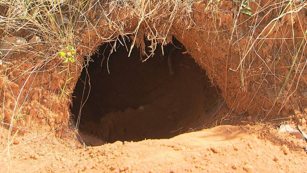Buraco cavado na terra por um tatu-canastra (Foto: TV Globo/Reprodução)