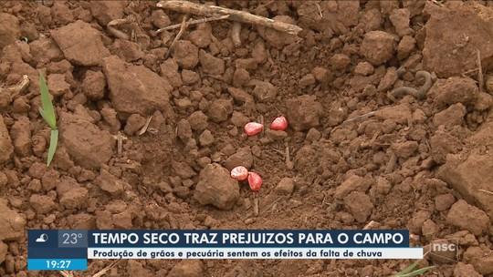 Produção de grãos e pecuária sentem efeitos da falta de chuva em SC