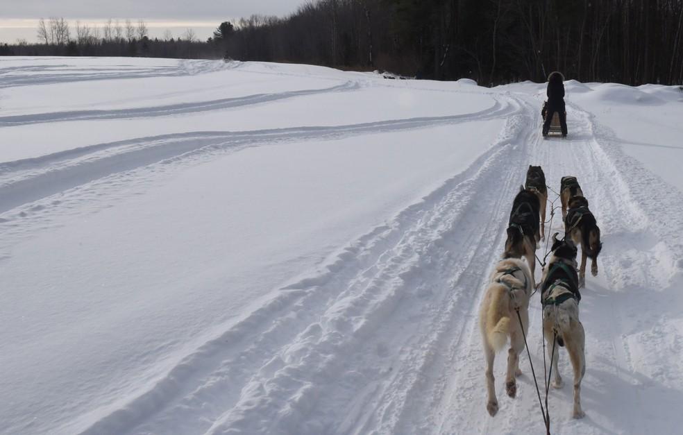 Uma pessoa e cães passam pela floresta Lanoraie, no Quebec, no Canadá, na quinta-feira (28)  (Foto: Timothy A. Clary/ AFP )