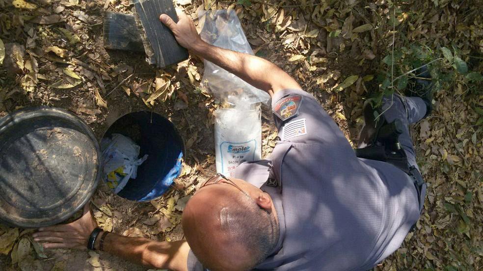 Droga foi localizada em uma mata em Martinpolis Foto Polcia MilitarDivulgao