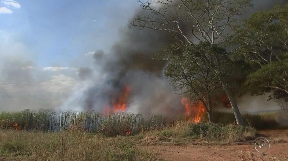 Incêndio destruiu cerca de 400 hectares de um canavial na região de Iacri (Foto: Reprodução / TV TEM)