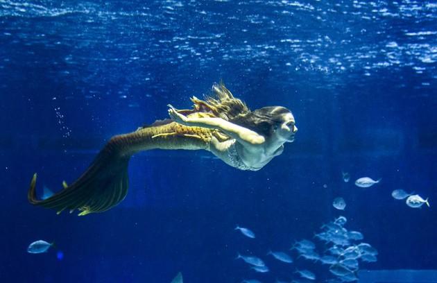 No sábado (26), Zeca vai descobre que Ritinha está trabalhando como sereia em um aquário em Belém (Foto: TV Globo)