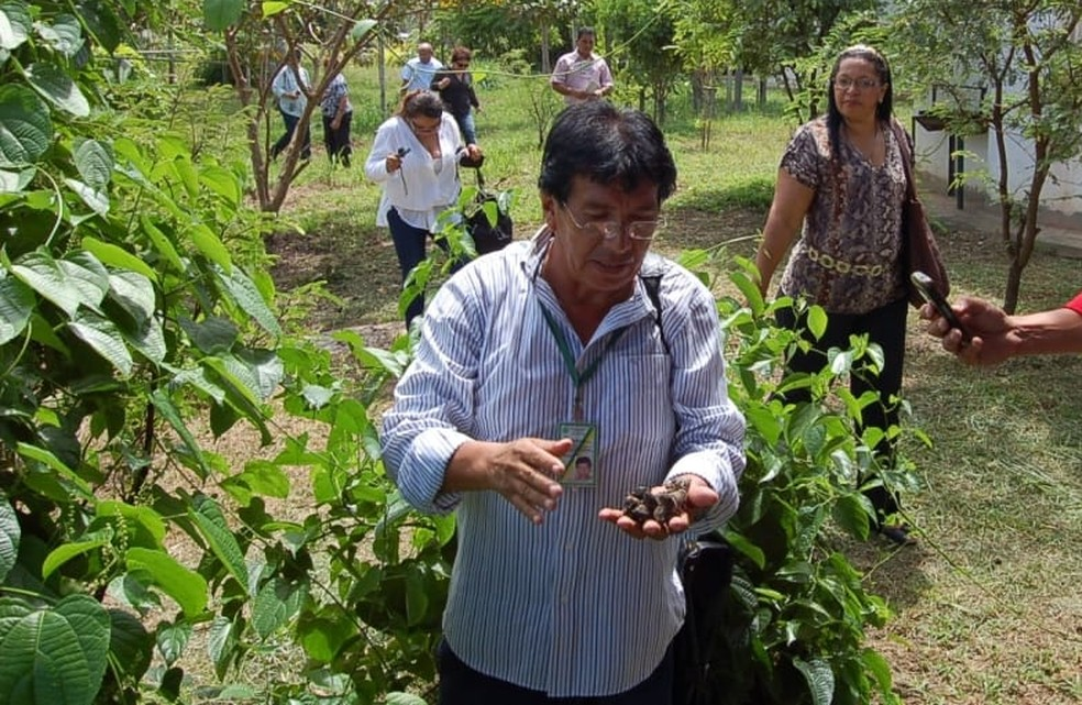 Pesquisador Juan Revilla em campo botânico em Manaquiri, antes da pandemia  — Foto: Ascom Inpa