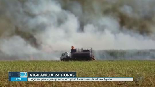 Morro Agudo, SP lidera ranking de cidades com maior número de incêndios no estado, diz Inpe